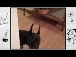 О чем думают животные, собака собирается на дачу.,Entertainment,,