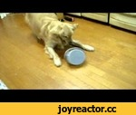 A terrible bowl and dog,Animals,,He hates it!
