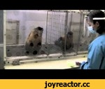 """Two Monkeys Were Paid Unequally: Excerpt from Frans de Waal's TED Talk,Entertainment,,What happens when you pay two monkeys unequally? Watch what happens. An excerpt from the TED Talk: """"Frans de Waal: Moral behavior in animals."""" Watch the whole talk here:"""