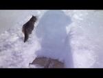 Котэ ошалел от первого снега. Коты веселятся. Funny Cat Videos,Animals,,Котэ ошалел от первого снега. Коты веселятся. Funny Cat Videos http://youtu.be/O4u0CN4q6r4  Смешные кошки!!! cool and funny cats Эти забавные и удивительные смешные кошки!  Свежая подборка смешного видео с кошками. Свежие видео