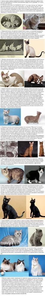 """У многих кошек теряются корни родословной, у некоторых выведение данного вида -результат скрещивания 2х и более уже известных пород, так что картинку """"до"""" местами пришлось опустить. Р.э. Отвечая на возгласы """"А У МЕНЯ НЕ ТАК!!!"""": есть такое понятие, как """"породная предрасположенность"""". Не считая хар"""