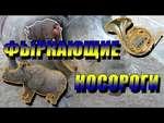 For Fun #57 ( Snorting rhinos / Фыркающие носороги ),Comedy,,Заходите на канал и подписывайтесь ➪ http://youtube.com/superchannelforfun  Предыдущее видео  ➪ http://youtu.be/M4s_rBM-lJg  Не забудьте рассказать друзьям и близким, ставьте лайк.  Спасибо за просмотр!