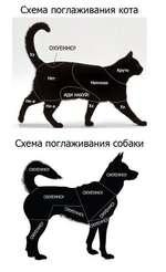 Схема поглаживания кота Схема поглаживания собаки