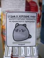 ОТДАМ В ХОРОШИЕ РУКИ милого котика похожего на крымского прокурора