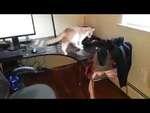 Как отучить кота лазить по столу,Comedy,,Игрушка Световой меч - https://www.youtube.com/watch?v=h_ybTM_Kh7E Медленно, медлеееенно....!!! - https://www.youtube.com/watch?v=o3Ln9FIBaUc Вот как надо финишировать! - https://www.youtube.com/watch?v=oFG9g_sGuf0