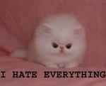 т  HATE EVERYTHING