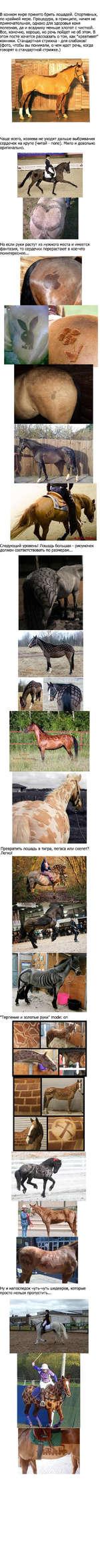 """В конном мире принято брить лошадей. Спортивных, по крайней мере. Процедура, в принципе, ничем не примечательная, однако для здоровья коня полезная, да и всаднику меньше хлопот с чисткой. Все, конечно, хорошо, но речь пойдет не об этом. В этом посте хочется рассказать о том, как """"креативят"""" конники"""