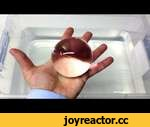 Water Balz Jumbo PART 2 Invisible Polymer Balls,Education,,Watch the original Water Balz video here: http://www.youtube.com/watch?v=9fGdOPyWi4Y  Subscribe:  http://www.youtube.com/subscription_center?add_user=IncredibleScience Visit us online at: http://www.incrediblescience.com Find us on Facebook