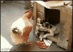 собака ебет петуха