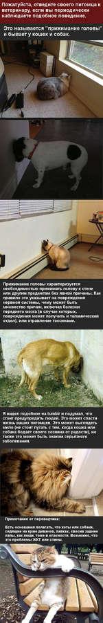 """Пожалуйста, отведите своего питомца к ветеринару, если вы периодически наблюдаете подобное поведение. Это называется """"прижимание головы"""" и бывает у кошек и собак. Прижимание головы характеризуется необходимостью прижимать голову к стене или другим предметам без явной причины. Как правило это указ"""