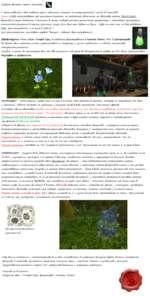 """Доброго времени суток, реактор) У меня появилась идея создания серии небольших статей на тему растений """"World of Warcraft"""". Суть: я буду рассказывать про растения Лзерота, но пытаться объяснить их свойства путем РЕАЛЬНЫХ фактов из мира ботаники и биологии в целом, подкрепляя это различными рецепт"""