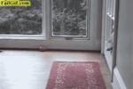 собака пролезает через дверцу для животных