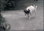 собака подкрадывается к кошке и пугает ее