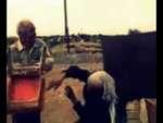 СЛЕПАЯ ЯРОСТЬ!!!!,Comedy,,злой дед избивает свою жену алкашку за то что та пропила единственную корову))