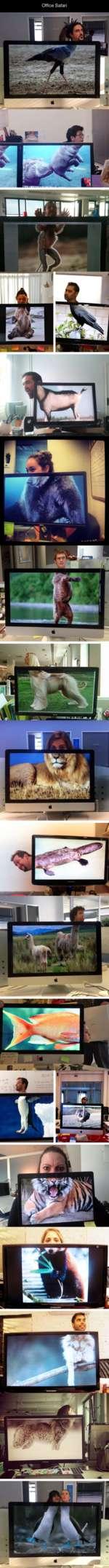 Office Safari