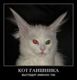 Кот гаишника выглядит именно так