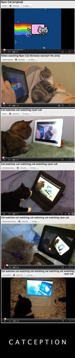 Nyan Cat [original] ssraJOOn Q Subscrtb« 12 video* ■» Kitten watching Nyan Cat (Котенок смотрит Ня кота) elwaysbungrycat Q Subscribo 70 video* ■» Cat watches cat watching nyan cat •edenes О Subscribe 21 videos ▼ Cat watches cat watching cat watching nyan cat shanethogoonerpsn Q Subscribe 57