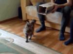 Кот прыгает в коробку