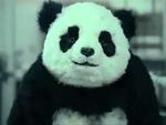 Никогда не говори панде нет (рус),Comedy,Панда,Panda,Сыр,Прикол,Милый,Скачать песню: http://depositfiles.com/files/bbthzm7gq