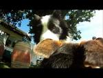 Один день из жизни собаки.mp4,Animals,Johnny Neon -- Hearts,Johnny,день,собака,один день из жизни собаки,Позитивное видео про один день из жизни собаки. Музыка: Johnny Neon -- Hearts Автор ролика: http://vimeo.com/davemeinert