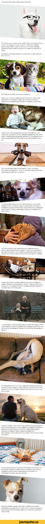 10 аргументов почему собака лучше психолога В отличии от кошек, которых мы тоже любим, собаке только дай повод знать, что мы в них нуждаемся, как они тут как тут. И в лучшие и в худшие времена, когда твой пес рядом ты чувствуешь себя лучше, тебя любят, понимают и тебя переполняет ощущение, что ты