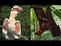 Попугай в шоке! Такого он еще не видел. Parrot shocked! This he has not seen,Pets & Animals,онлайн путешествия,путешествие,смотреть путешествие,путешествие онлайн,необыкновенное путешествие,земля путешествия,необыкновенное путешествие онлайн,сидней,австралия,Sydney,Australia,какаду,попугай,летучая л