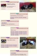 Anonymous (ID: СВЕЯВ» 08/08/14(Fri)00:42:42 No.561136260 Возвращаясь с отпуска, я подобрал 4 бродячих котят. Как всегда 69-ый решит, что мне с ними делать. ОП достовляет Anonymous (ID: ip«cwwKe>) 08/08/14(Fh)00:47:28 No.561136661 Сделай бумажную шляпу для каждого. >>561136854 » >>561137352»