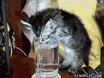 Выйду ночью в кухню с котом...,Animals,кошки,смех,умора,ржач,коты,приколы,смешное,курьезы Pets,Кошачьи выкрутасы под прикольную песенку. Скачать песню можно здесь: http://mp3sort.ifolder.ru/29609973 Мои подборки с приколами: http://www.youtube.com/playlist?list=PLAF2BC5F002B1403C