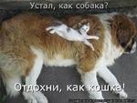 Устал, как собака? Отдохни, как кошка!