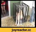 Pet Wash - Ice Bucket,Entertainment,Bondage,Girl locked in a cage has a bucket of ice cold water poured on her