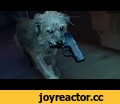 Dog Wick,Film & Animation,rocketjump,rocket,jump,rj,vfx,action,vghs,freddie,freddiew,wong,john wick,john wick 2,gunplay,guns,gunfight,They messed with the wrong dog. Thanks to John Wick 2 for sponsoring this video! The movie out this Friday! Get your tickets here: http://tickets.johnwick.movie/