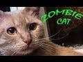 ЗОМБИ КОТ КЕША - ZOMBIE CAT KESHA/ ЗОМБИ КОШКА,КОТ СЛОМАЛСЯ (ЗАВИС) - СДУРЕЛ,Pets & Animals,хохма,фарс,веселые видео,веселые животные,веселье,прикольный мультик,игривый,уморительный,шуточный,звери,не смешно,смешно видео,это смешно,киска,курьезный,нелепый,упоротый кот,упоротый,кот прикол,позитив,смех