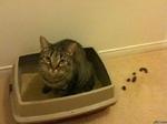 кот насрал мимо лотка