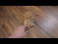 Embrace (cat hugs),Pets & Animals,embrace,cat,hugs,Кот,Котэ,Обнимашки,Kitty,cat embrace | cat hugs Кошачьи обнимашки https://vk.com/public143842225