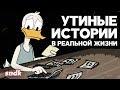 НОВЫЕ УТИНЫЕ ИСТОРИИ: Реалистичная Версия | sndk,Entertainment,сыендук,мульт,мультфильм,заставка,duck tales,2017,перезапуск,песня,интро,озвучка,пародия,Поддержи канал, купи Биван: http://bivan.ru/sndk/ ---- sndk Вконтакте: http://vk.com/sienduk  Вокал: Павел Бочкарев (https://vk.com/pbochk) Сведение