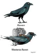 Westeros Raven Dirgo 2017
