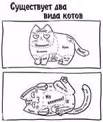 Существует два вида котов