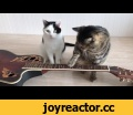 2 cats play the guitar,Comedy,Viral,Video,Epic,Jukin Media Verified (Original) * For licensing / permission to use: Contact - licensing(at)jukinmediadotcom  Submit your videos here: http://bit.ly/2iFnUya