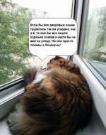 Если бы все дворовые кошки трудились так же усердно, как и я, то они бы все нашли хороших хозяев и никто бы не жил на улице. Но они просто ленивы и бездарны!