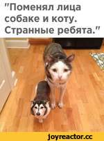 """""""Поменял лица собаке и коту. Странные ребята."""""""