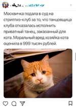 «У Москвичка подала в суд на стриптиз-клуб за то, что танцовщица клуба отказалась исполнить приватный танец, заказанный для кота. Моральный вред хозяйка кота оценила в 999 тысяч рублей. а V