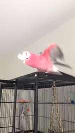 Worlds most excited bird