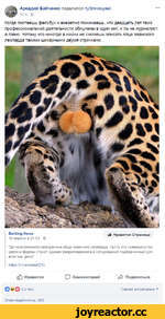 Аркадий Бабченко поделился публикацией. 12 ч - е Когда листаешь фейсбук и внезапно понимаешь, что двадцать лет твой профессиональной деятельности обнулены в один миг, и ты не журналист, а говно, потому что никогда в жизни не сможешь описать яйца яванского леопарда такими шикарными двумя строчками