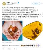 СвТЫ на русском вГЛ ^ @cgtnruss¡anV   У Китайские и американские ученые обнаружили скелет древней лягушки в янтарной смоле, которая жила 99 миллионов лет назад, в середине мелового периода. Новый вид получил название Е1ес1тогапа Итоге 2:00 - 17 июн. 2018 г. ССТМ на русском 18 ретвитов 26 о
