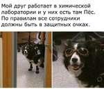 Мой друг работает в химической лаборатории и у них есть там Пёс. По правилам все сотрудники должны быть в защитных очках.