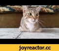 Cat Watching Horror Movie,Comedy,Viral,Video,Epic,Jukin Media Verified (Original) * For licensing / permission to use: Contact - licensing(at)jukinmediadotcom
