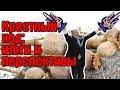 Крестный ход: итоги и перспективы,News & Politics,ДНР,АТО,война на Донбассе,Донецк,Донецк сегодня,Крестный ход,крещение руси,владимир великий,28.07.2018,порошенко,упц,упц мп,упц кп,автокефалия,новинский,путин,политика,новости,украина,россия,свежие новости,молитва,саморазвитие,крестный ход в киеве,ки