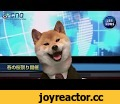 Dog Became Famous Anchor News In Japan,Pets & Animals,Dogs,News,Japan,Shiba Inu,I do not own this and have no intention of making money off this. I have only posted this because it is an awesome video that should be shared with the world.