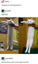 sa erar9 longeât is probably dead :( kremlint WRONG notcuddles Awww, long cat's owner got married.