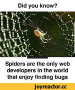 Did you know? Spiders are the only web developers in the world that enjoy finding bugs